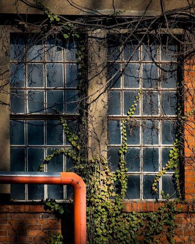 Overgrown Shadow Twiner Sunlight Building Windows Plants Industrieromantik Industry Pipeline Bricks Brickhouse Fujifilm_xseries Fujifilm Overgrown Window Architecture Built Structure Metal Pipe - Tube No People Day Building Exterior Outdoors