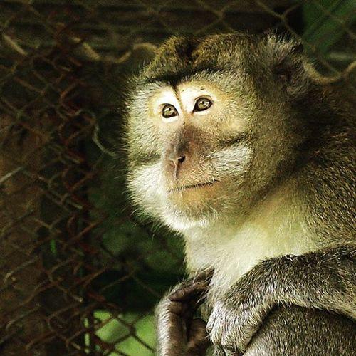 What is he thinking? Monkey Monyet Animal Snimaloftheday Animalofinstagram Cool Nice Photooftheday