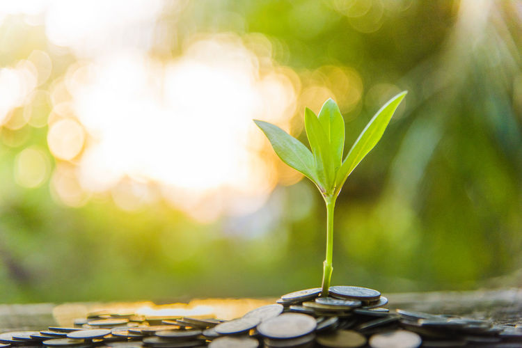 Finance And Growth Beauty In Nature Beginnings Close-up Day Finance Focus On Foreground Freshness Green Color Growth Leaf Lens Flare Nature No People Outdoors Plant Plant Part Selective Focus Sunlight Vulnerability  Wealth