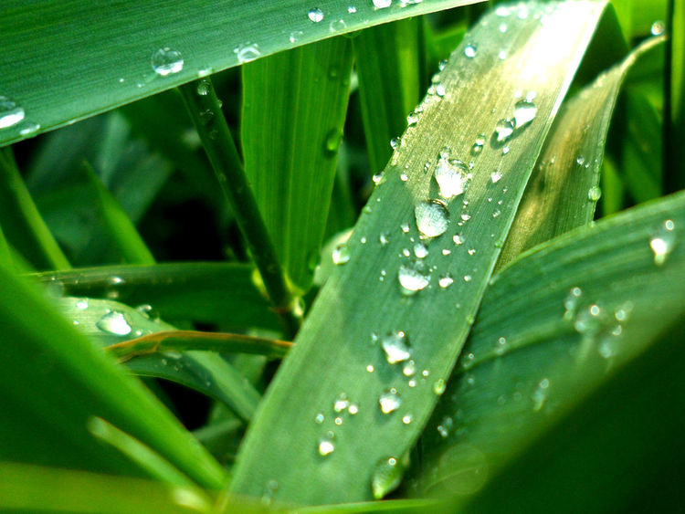 Green Color Nature Drop Day Outdoors No People Beauty In Nature Water Freshness Grass