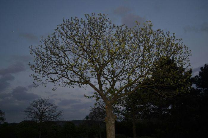 TreePorn Light And Shadow Eye4photography  500!