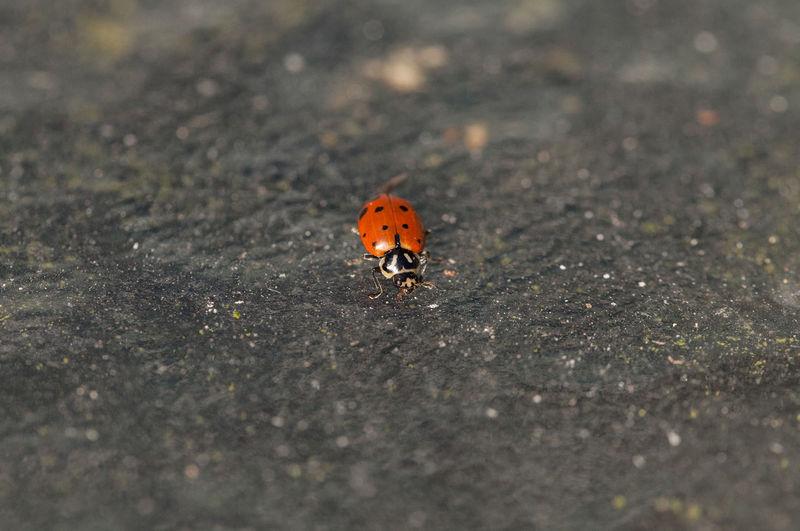 High angle view of ladybug