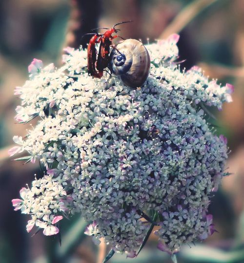 Insect Nature