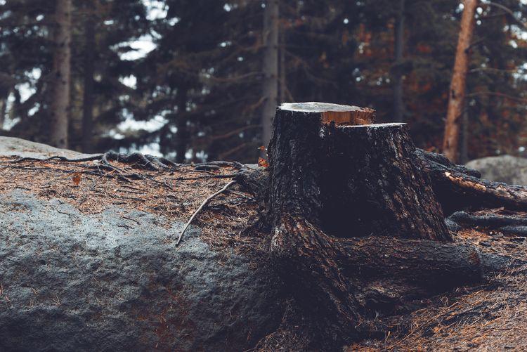 Death. Tree