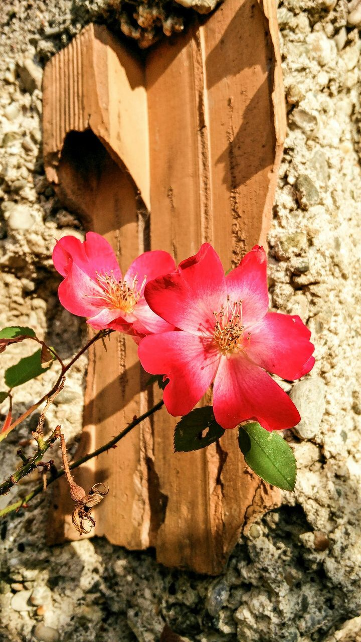 Close-Up Of Red Roses Against Wall