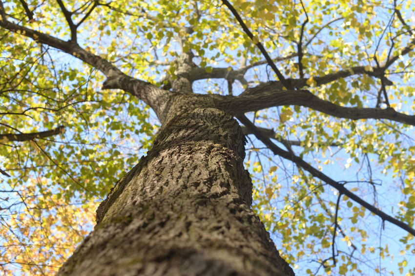 Feeling tiny compared to this world's wonders... Beauty In Nature EyeEm Nature Lover Full Frame Low Angle View Nature Sky Tranquility Tree Tree Trunk EyeEm Tree Collection Eyeemphotography