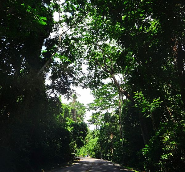 A road less travelled.. Tree Trees Tree And Sky Tall Trees Green Green Green!  Green Leaves Road Clear Sky Beauty In Nature Nature Growth No People Outdoors Road With Trees Shadows & Light Roadphotography Jungle JungleExperience Peaceful And Quiet