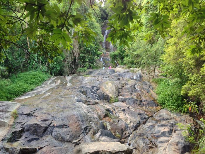 Plant Tree Rock Nature Forest Growth Solid Rock - Object Land Day Green Color Outdoors Beauty In Nature Environment Foliage Lush Foliage Tranquility No People Adventure WoodLand