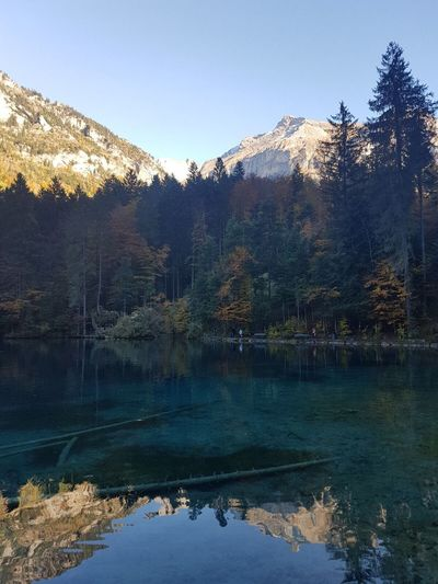 Blausee, Switzerland Mountain Nature Water Lake Reflection Tranquil Scene Tranquility Scenics Beauty In Nature No People Day Tree Outdoors Mountain Range Sky Landscape Clear Sky