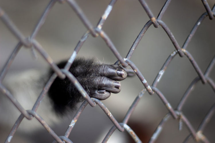Close up monkey hand in cage