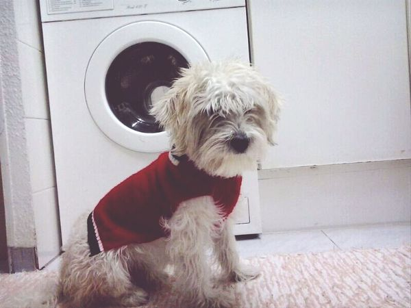 My Dog Thebest Love <3