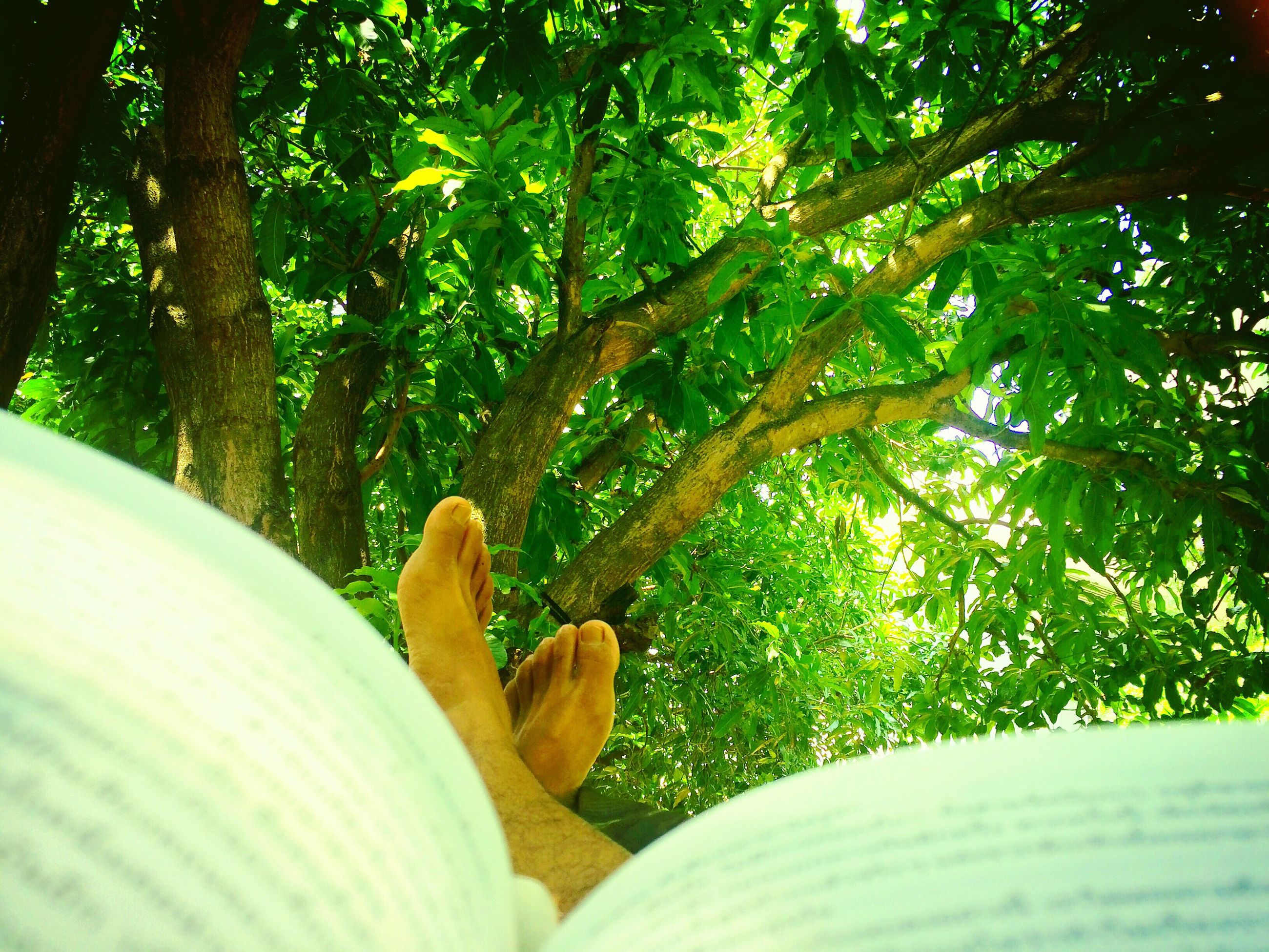real people, human leg, human body part, one person, barefoot, low section, tree, human foot, personal perspective, day, leisure activity, outdoors, green color, women, growth, lifestyles, nature, one animal, human hand, relaxation, men, grass, close-up, beauty in nature, mammal, people