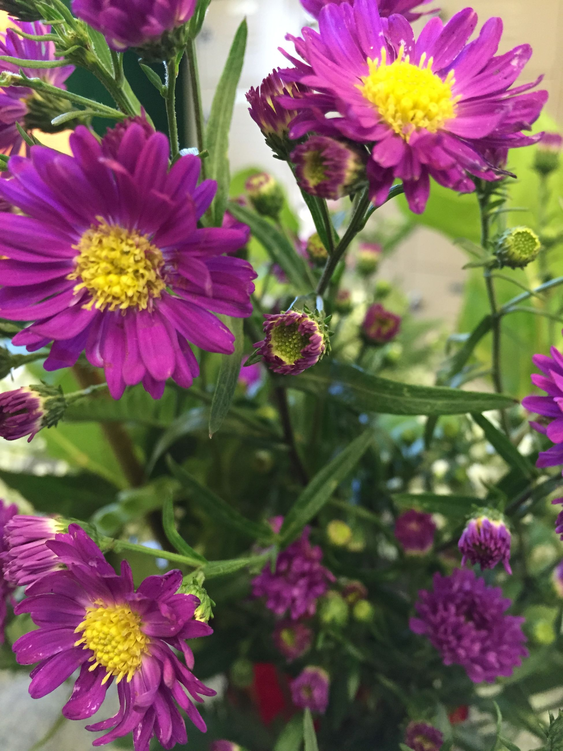 flower, freshness, petal, fragility, flower head, growth, beauty in nature, purple, insect, pink color, blooming, nature, plant, close-up, focus on foreground, in bloom, one animal, pollen, pollination, animal themes