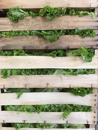 Detail shot of plants on wooden fence