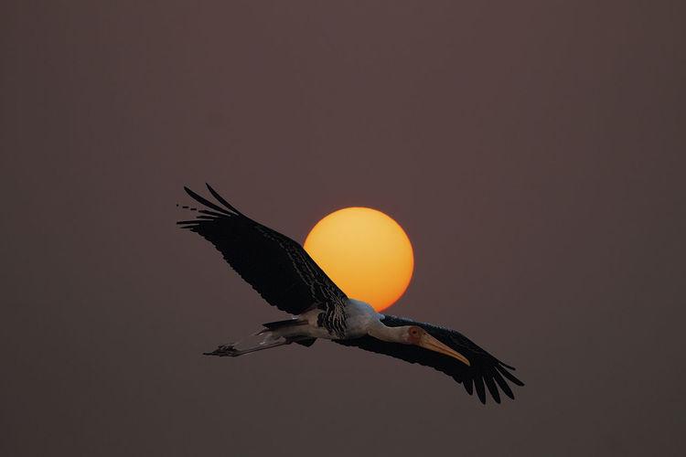 Eagle Eagle -