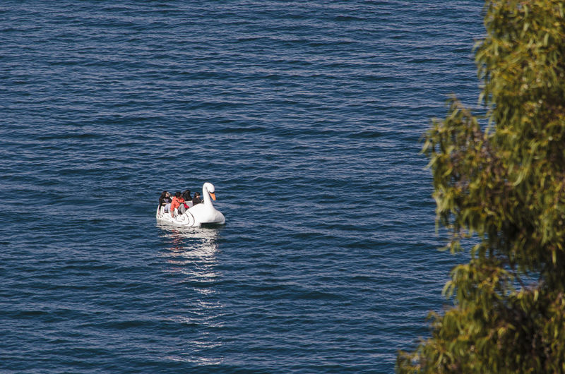 People on swan boat in sea