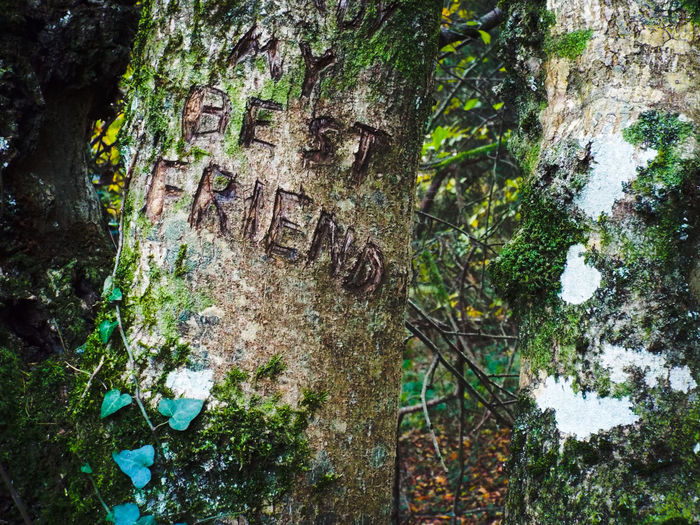 Text Scribbled On Tree Trunk In Forest