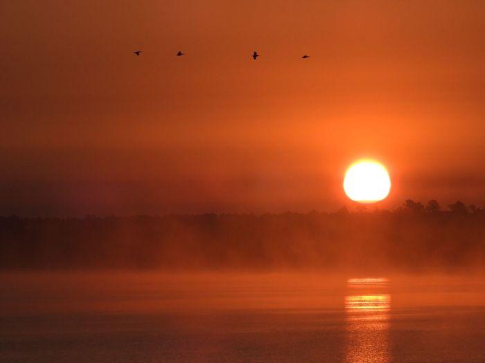 Lake Bemidji Sunrise Misty Morning Birds In Flight Reflection Northern Minnesota Lake Bemidji
