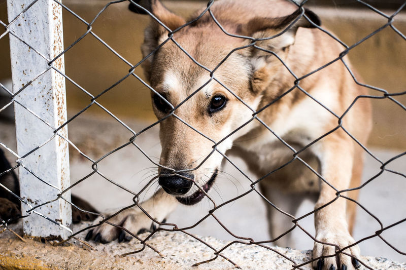 Close-up of a dog seen through chainlink fence