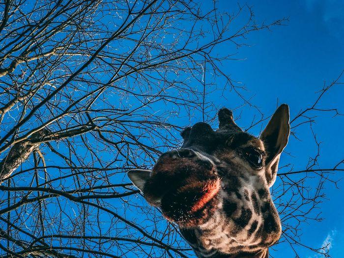 Giraffe EyeEm