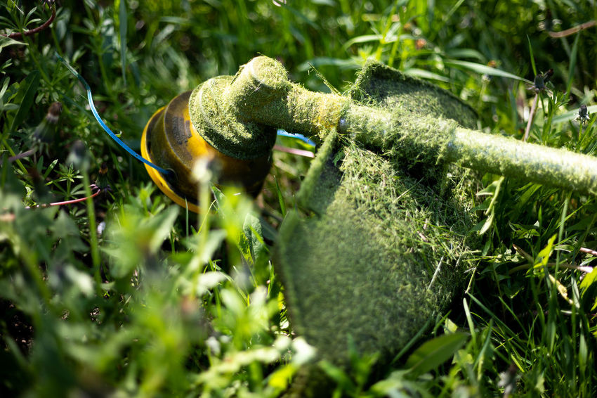 EyeEmSelect Day Field Grass Green Color Lawnmower Nature Outdoors Plant Selective Focus Sunlight