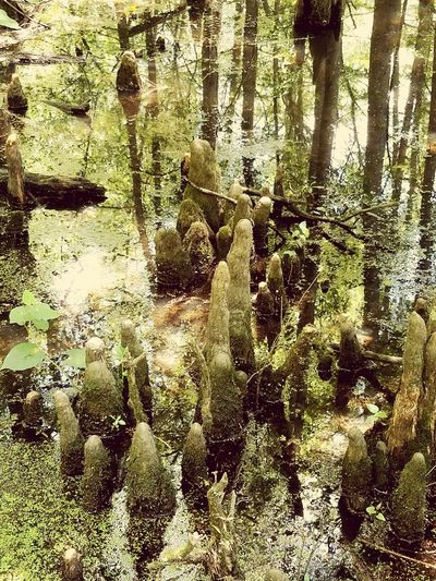 Nature Full Frame Growth Backgrounds No People Outdoors Plant Tree Beauty In Nature Cypress Knees Cypress Trees  Swamps Bayou The Great Outdoors - 2017 EyeEm Awards