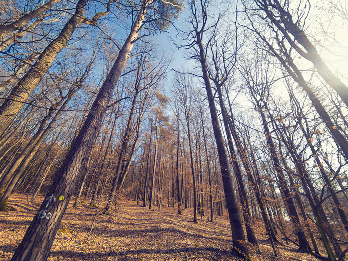 Bare trees in forest