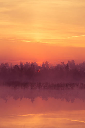 A beautiful, pink sunrise ower the swamp. Sun rising in wetlands, purple misty atmosphere. Latvia, Northertn Europe Morning Pink Swamp Beauty In Nature Nature No People Outdoors Purple Scenics - Nature Sky Sunrise Tranquil Scene Tranquility