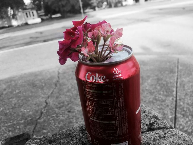 Floral Can Beauty In Nature Flowers Coke Can Park Colorful Sweet Peace