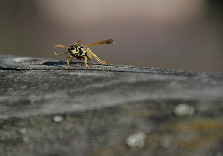 a wasp enjoys