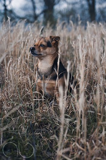 The Portraitist - 2017 EyeEm Awards Dog Outdoors Grass Nature Pomchi Portrait