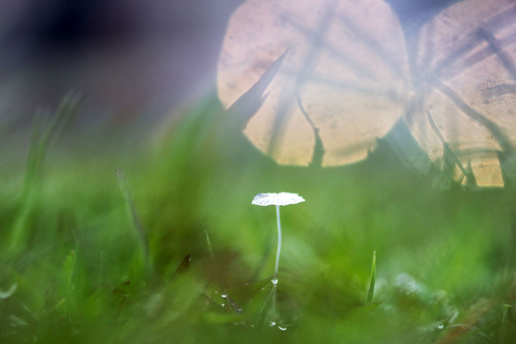 background of grass and mushrooms with bokeh Plant Growth Selective Focus Freshness Beauty In Nature Flower Close-up Flowering Plant Fragility Nature Vulnerability  Green Color Grass Day No People Petal Field Land White Color Outdoors Flower Head Dew