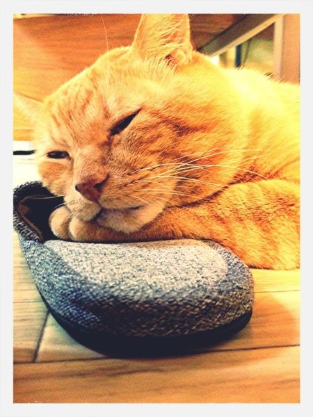 Annoying Drowsy Slippers Japanese Cat Cat