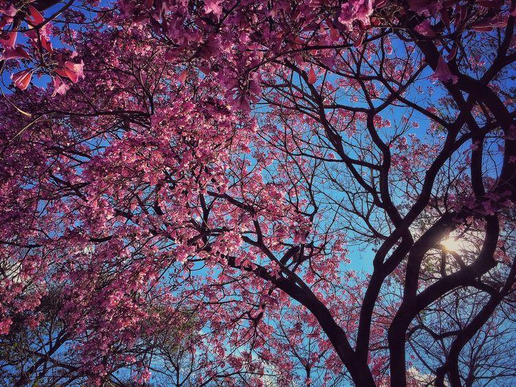 Spring blossoms Spring Blossom Spring Flowers EyeEm Nature Lover EyeEm Best Shots - Nature Eye4photography  Pink EyeEmBestPics EyeEm EyeEm Gallery
