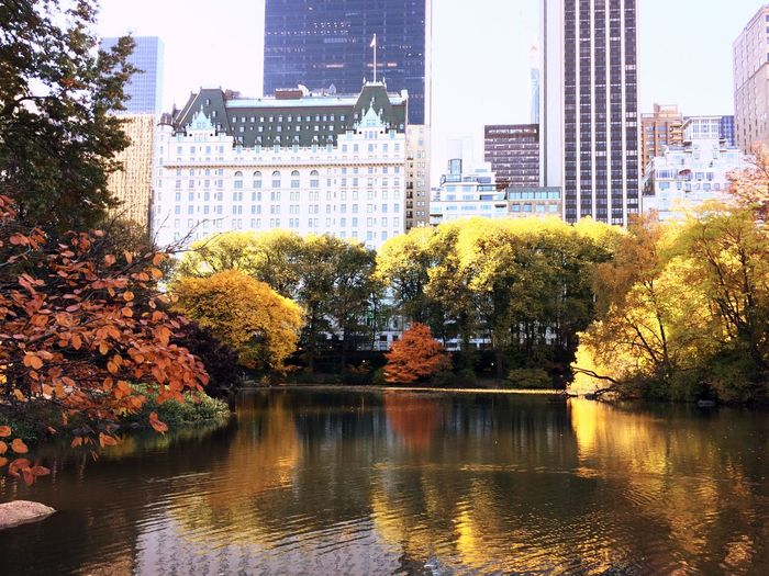 Trees by lake against buildings in city during autumn