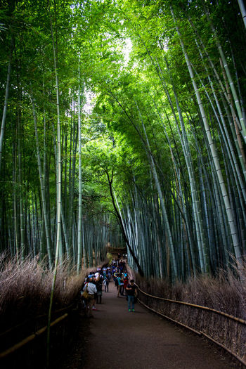 """Look deep into nature, and then you will understand everything better."" - Albert Einstein ASIA Bamboo Bamboo - Plant Bamboo Grove Beauty In Nature Green Green Color Japan Kyoto Maze Nature Outdoors Path Scenics Tall - High Temple Tenryuu-ji Temple Tranquility Travel Destinations Travel Photography Tree"