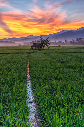 Sunrise Morning at Anyer Agriculture Beauty In Nature Cloud - Sky Crop  Environment Farm Field Grass Green Color Growth Land Landscape Nature No People Outdoors Plant Plantation Rural Scene Scenics - Nature Sky Sunset Tranquil Scene Tranquility