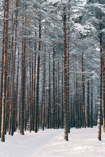 Forest Winter Trip Snow Winter Cold Temperature Tree Plant Land Beauty In Nature Nature No People Forest Environment Day Landscape Outdoors My Best Photo