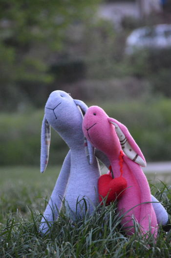 Toy Rabbit Toyphotography Toys Toyrabbit Toy Plush Plushtoy Plush Toy Plush Bunny