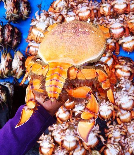 Curacha Redfrogcrab Spannercrab Jolosulu Seafood Crab KingCrab