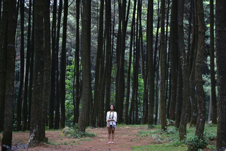 Woman Standing Amidst Trees In The Forest