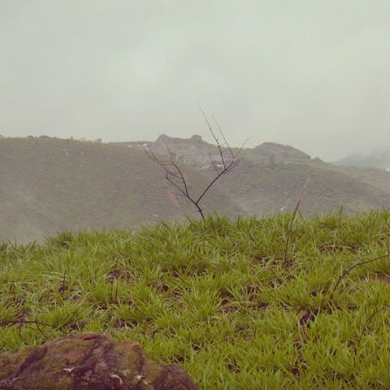 Dotspin Betosalvestrini Art Original Natural Venezuela Sancristobal - peaceful