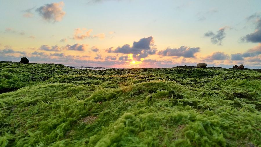 Sunset Nature Field Cloud - Sky Landscape Grass Outdoors Beauty In Nature No People Sky Heat - Temperature Scenics Dawn Multi ColoredVacations Tropical Climate Horizon Over Water Water Beach Vacation2017 Summerinseptember Summerinphilippines Cabongaoan Pangasinan Cabongaoanbeach Clear Sky