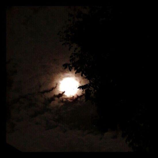'A man bitten, is a man cursed.' Taking Photos Hanging Out Enjoying Life full moon Relaxing