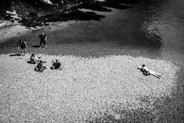 High Angle View Water Animal Themes Animal Nature Vertebrate Day Group Of Animals Land Beach Animal Wildlife Animals In The Wild Outdoors Bird Togetherness No People Sea