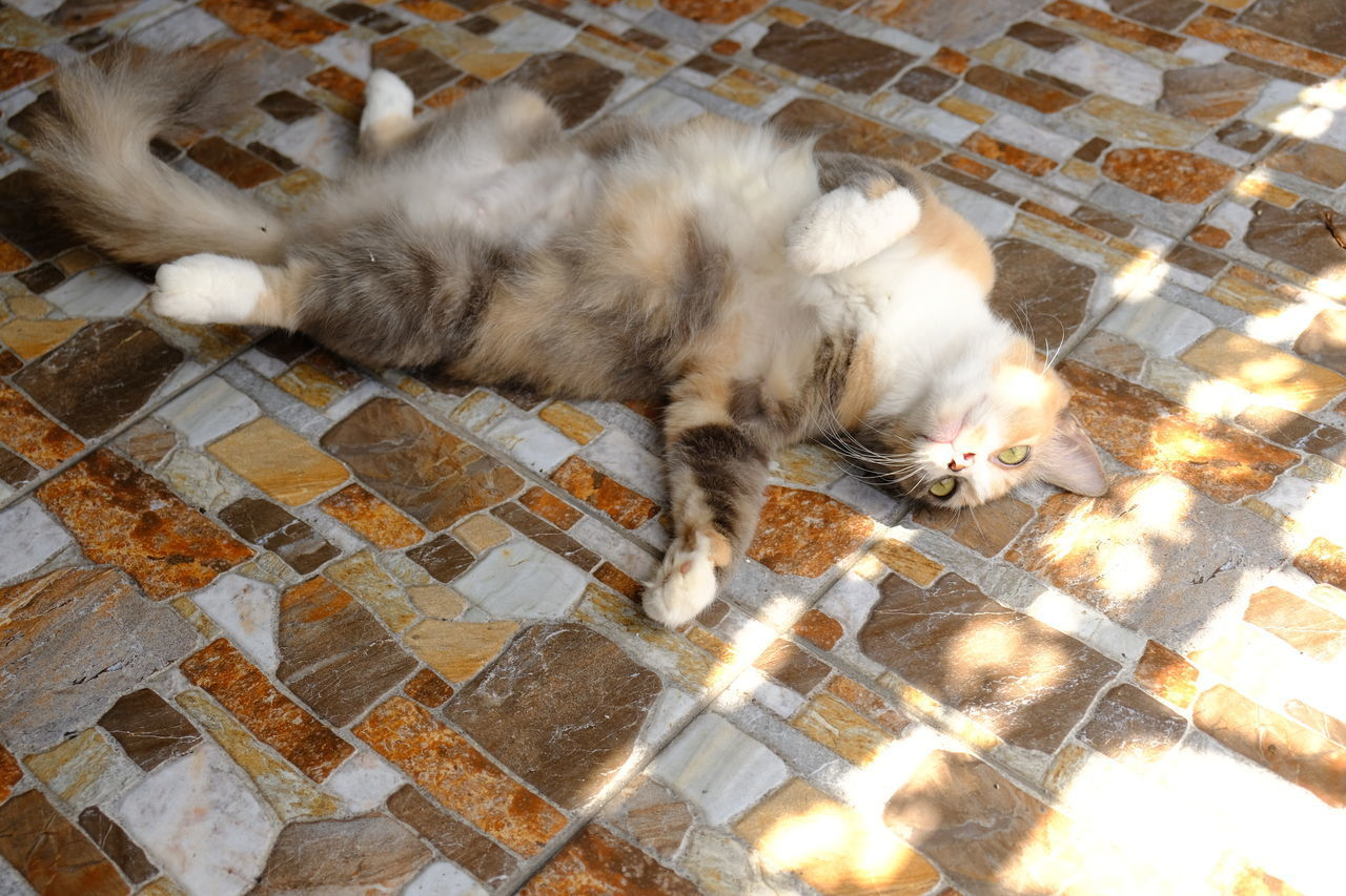 HIGH ANGLE VIEW OF CATS SLEEPING ON TILED FLOOR