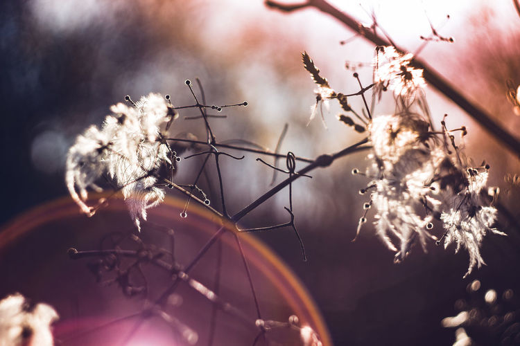 58mm Abstract Nature EOS Helios Beauty In Nature Canon Canon 1300d Close-up Flower Fragility Growth Helios 44M Illuminated Lens Flare Lens Flare Magic Lens Flare Sun Lens Flares Low Angle View Nature No People Outdoors Vintage Lens Vintage Lens On Modern Camera Vintage Lenses Vintage Photo