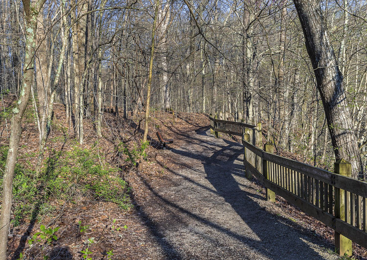Time for a hike at the start of spring. Tree Forest Tranquility Nature Tree Trunk Bare Tree The Way Forward Footpath Beauty In Nature Sunlight Tranquil Scene Outdoors WoodLand Shadow Landscape Rural Scene Peaceful Idyllic Countryside
