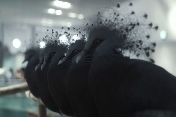 Re Edit/re Post Lined Up Birds🐦⛅ Lined Up In A Row Animal Themes Bird Photography Indoor Animal Photography Zoo Photography  EyeEm Nature Lover From My Point Of View Capture The Moment Selective Focus Taking Photos OSAKA NIFREL ニフレル 前の写真があまりに赤浮きしすぎてるのが恥ずかしくなって再編集/再投稿。