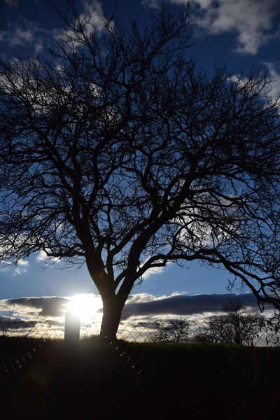 Bare Tree Beauty In Nature Branch Day Landscape Nature No People Outdoors Scenics Silhouette Single Tree Sky Sun Sunbeam Sunlight Sunset Tranquility Tree